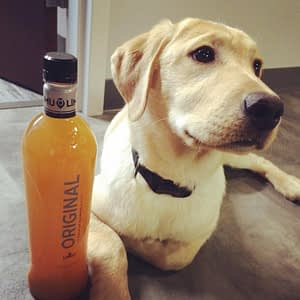 dog by limu bottle