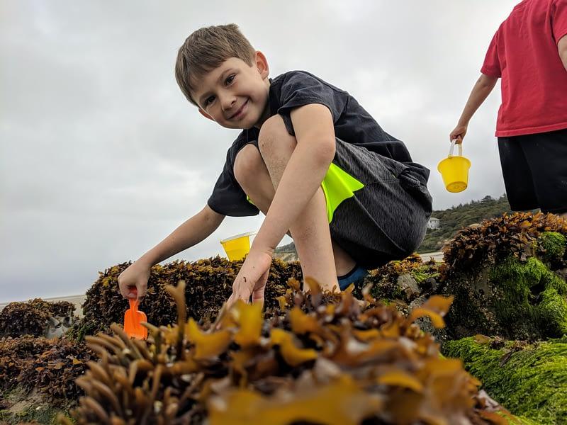 Kid playing in brown seaweed