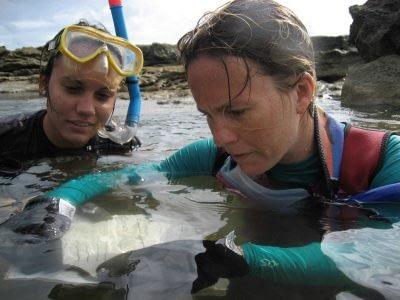 Divers gathering seaweed