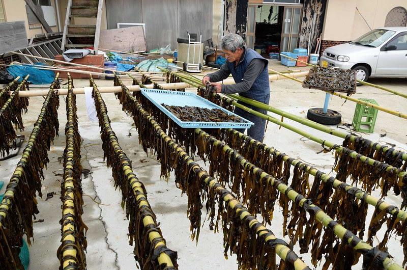 seaweed drying on lines